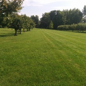 Lawn & Beyond Property Maintenance