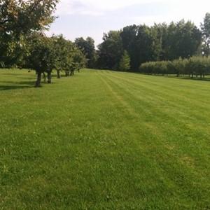 Lawn & Beyond Property Maintenance